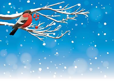 Vogels in de winter MB